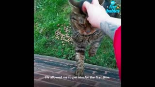 Angry stray cat goes viral after woman documents their unlikely friendship