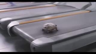Turtle sport