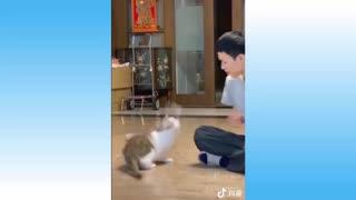 kitten don't tease me