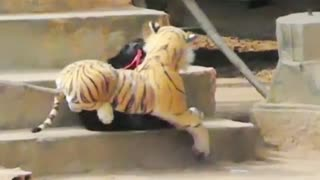 Funny trolling with dog, using tigers and stuffed lions