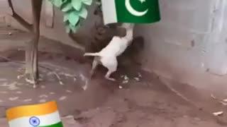 TIGER V.S DOG fight