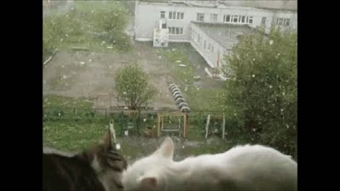 funny cats clips funny funny