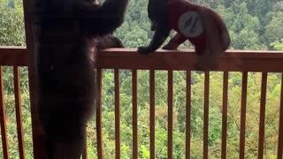 Pair Of Bears Enjoy Bird Feeder