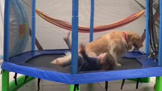 Best friends are playing together in a trampoline