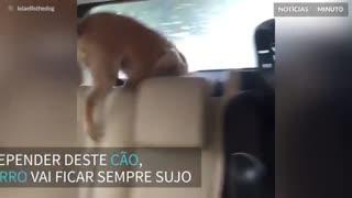 Cão odeia quando lavam o carro da família