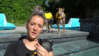 Swimming dog Training!!!!