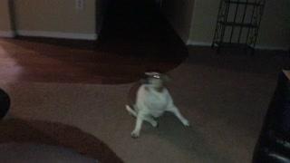 Spinning Dog