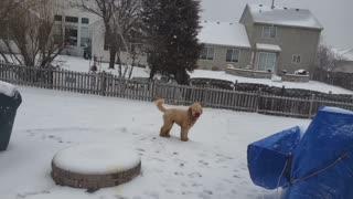 Come back Doggie 🐕