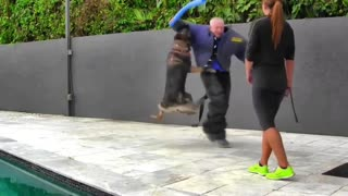 Making a dog aggressive