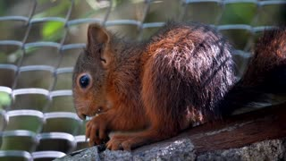 Super cute squirrel ! OMG look what he just did!