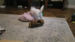 Milli loves Pink Puppy