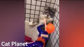 FUNNY CUTE CATS TTY NOT TO LAUGH