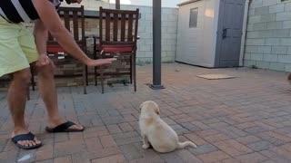 training of puppy dog