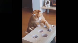 Cutest pets try not to laugh