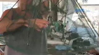 Stupid fishing traps