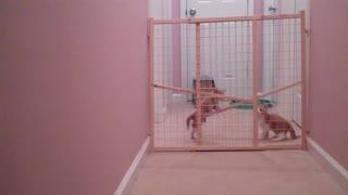 Double Kitten Escape!