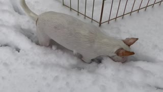 Puppy explores snow for the first time