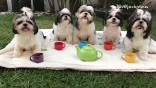 Black/white puppy tea party on towel on grass