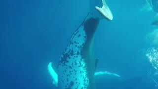 Close with whales
