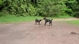 Rocky and Rosie playing