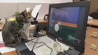 this video shows kittens watching tom and jerry