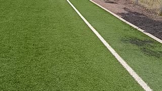 Dopey walking at Field