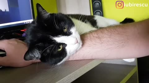Needy cat makes work day extra cute