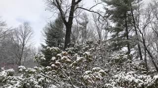 Snow February 2020