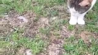 Cat play whit Friend