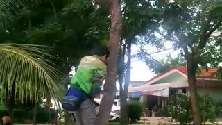 Good Samaritan Saves Kitty Trapped in Tree