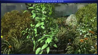 Process of Photosynthesis Animation