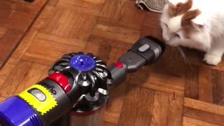 Vacuum Gets a Good Thrashing