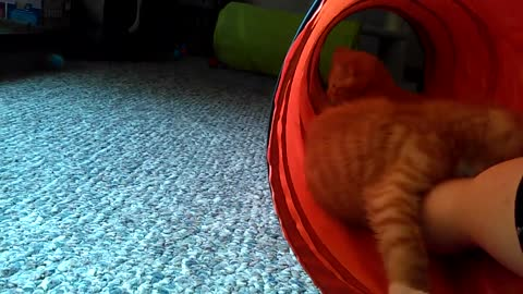 Kitten Loves Mouse Toy, Then His Brother Steals It