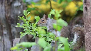 Cute squirrel on a wood ! Look what he just did !!!
