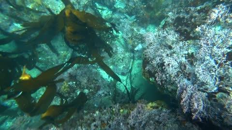 Spearfishing - Big Sur - Monterey County
