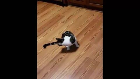 She's cat-dog