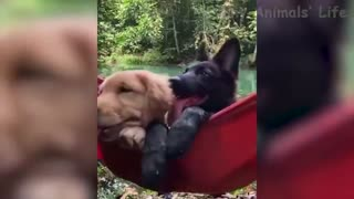 Funny pets so exciting
