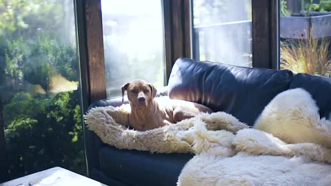 Dog Sitting On The Couch