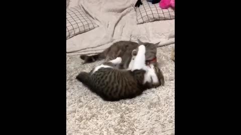 funny catsss
