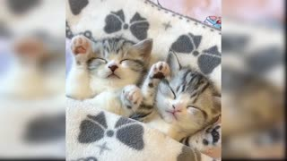 Extreme cute kittens extra funny | compilation video