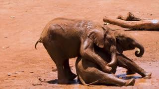 Cute Elephant baby Elephant