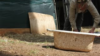 Two Eastern Brown Snakes Removed from Duck Pen