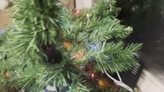 Angry Christmas cat