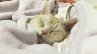 Tucking my cat in-a cat that is put to sleep