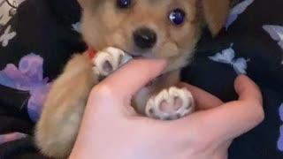 Cute Puppy Teething