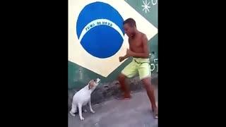 Perrito bailarin