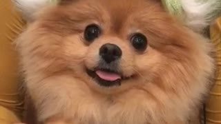 Smiling doggy has case of happy feet