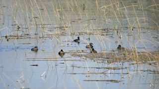 Birds floating on a pond - With great music