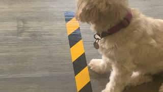 Dog Politely Maintains Social Distancing Regulations
