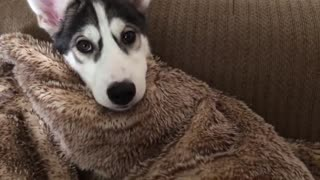 FUNNY DOG VIDEOS TO START YOUR DECEMBER! Funny Dogs